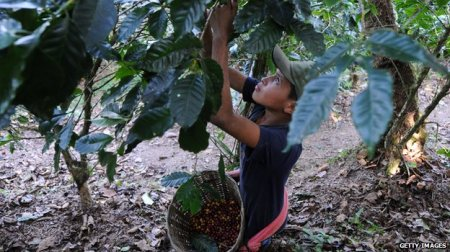 Honduras is Central America's second biggest coffee producer